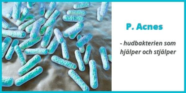 propionibacterium acnes akne bakterie finnar